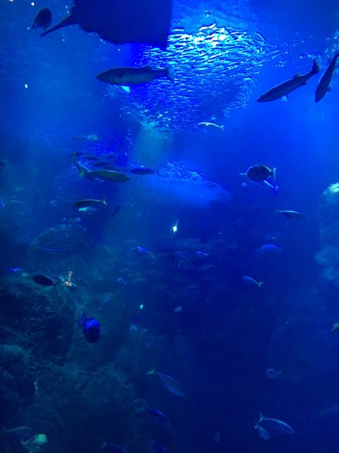 鎌倉と江ノ島水族館のナイトアクアリウム